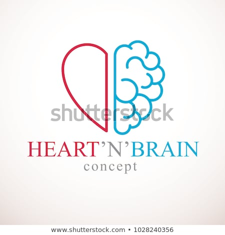мозг · сердце · мышления · любви - Сток-фото © adrian_n