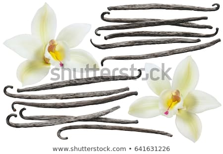Orchids And Vanilla Set  Stock photo © adamson
