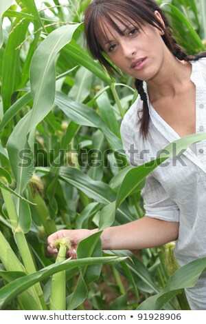 Agriculturist stood in corn field Stock photo © photography33