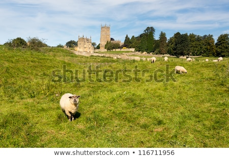 Church St James across meadow in Chipping Campden Stock photo © backyardproductions