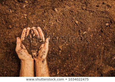 Soil in hands of agricultural worker Stock photo © stevanovicigor