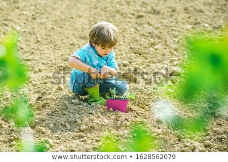 verduras · frescas · regadera · negro · tierra · alimentos · hoja - foto stock © photography33