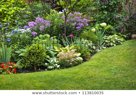 Lush landscaped garden Stock photo © elenaphoto