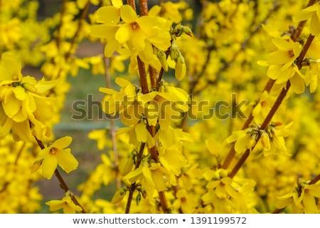 небе · весны · природы · фон · завода · парка - Сток-фото © snapshot