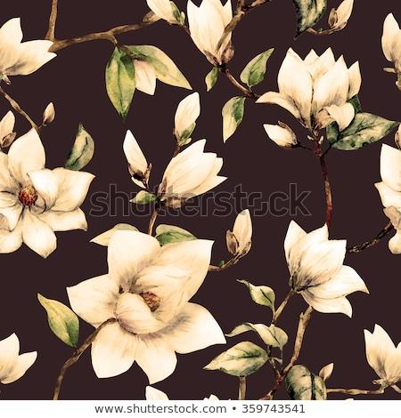 Pembe manolya çiçekler karanlık doku ağaç Stok fotoğraf © snyfer