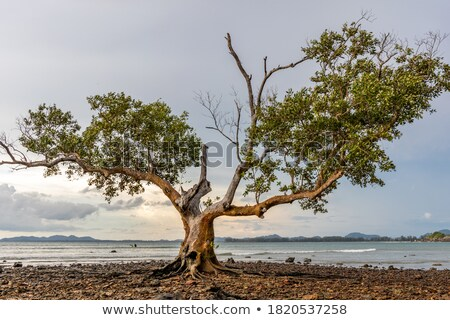 Landscape, sea, rocks,  solitary tree. Stock photo © Tatik22