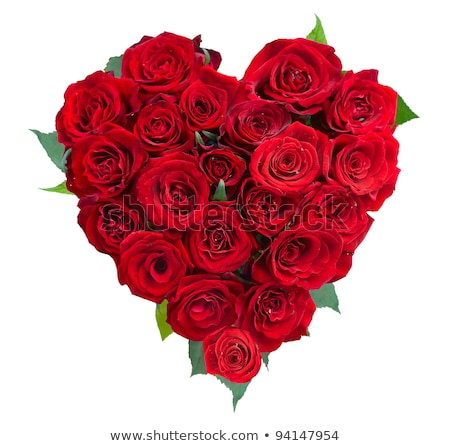 красивой · закрывается · цветок · красный · лепестков · красную · розу - Сток-фото © lunamarina
