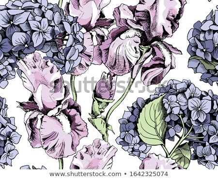 hortensia and iris flowers background Stock photo © neirfy