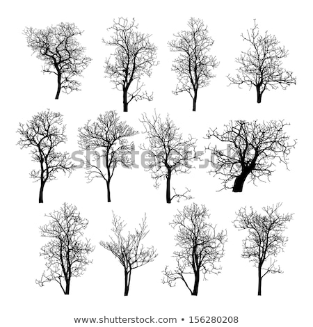 Stockfoto: Vector Bare Old Dry Dead Tree Silhouette Without Leaf - Oak Crow