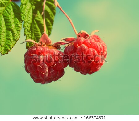 par · framboesa · folha · verde · comida · fundo - foto stock © mikko