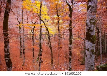 sonbahar · orman · İspanya · düşmek · çim · doğa - stok fotoğraf © lunamarina