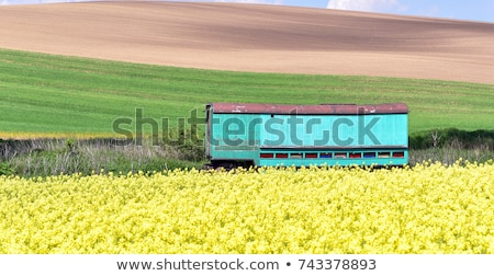 dziedzinie · świeże · kwiaty · Błękitne · niebo · piękna · żółte · kwiaty - zdjęcia stock © meinzahn