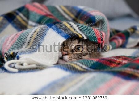 Kat verbergen deken vergadering oranje witte Stockfoto © willeecole