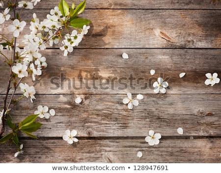 gruszka · kwiat · makro · widoku · białe · kwiaty · drzewo - zdjęcia stock © stevanovicigor