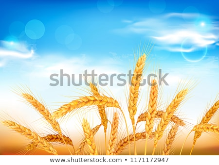 Sheaf Golden Wheat Ears Stock photo © Discovod