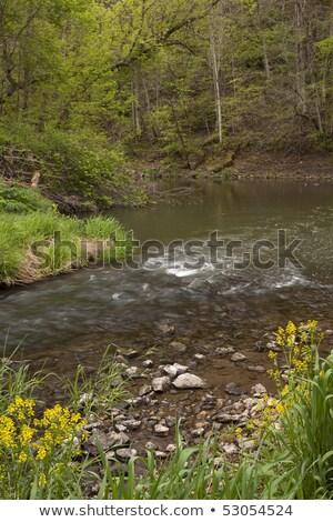 żółte kwiaty zatoczka kwiaty wody drzewo trawy Zdjęcia stock © c-foto