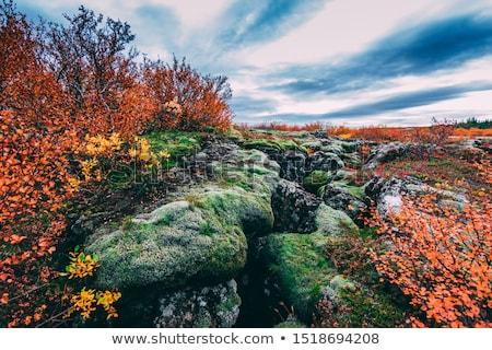 scénique · vue · célèbre · Islande · eau · herbe - photo stock © 1tomm