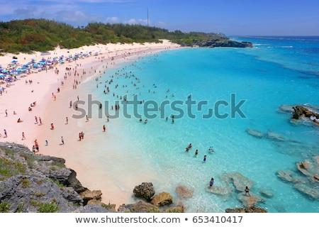 At nalı plaj sahne boş doğa deniz Stok fotoğraf © arenacreative