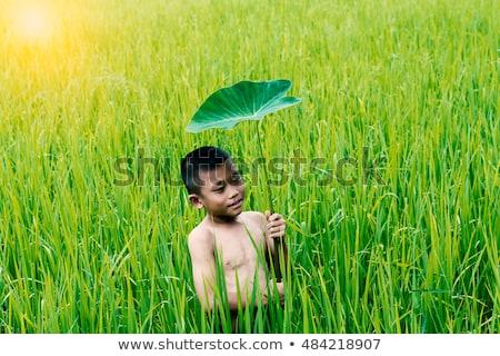 one little preschool boy who have harvest one great bunch of rhubarbs in the garden on a sunny sprin stock photo © klinker