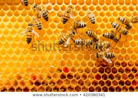 Honingraat bijen honing texturen boerderij Stockfoto © jordanrusev