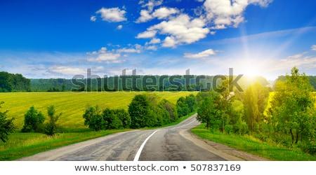 Gyönyörű nyár vidéki táj vonalak mező hajlatok Stock fotó © artush