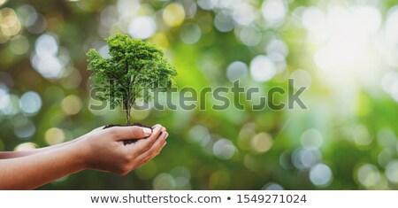 Zielone charakter ilustracja trawy krajobraz niebieski Zdjęcia stock © bluering