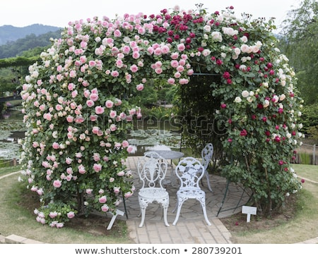 Stock photo: red roses on a white chair