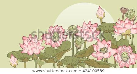 lotus · gölet · arka · plan · Çin - stok fotoğraf © mikko