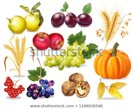 apple,grape and walnut Stock photo © M-studio