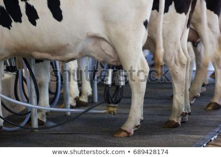 乳製品 · ファーム · ミルク · 動物 · 牛 · 誰も - ストックフォト © monkey_business