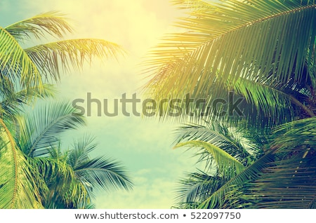 Stock photo: Green Palm Tree Leaves Against Blue Summer Sky
