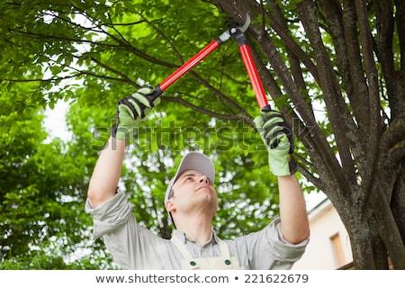 cięcia · drzew · lasu · tekstury - zdjęcia stock © ustofre9