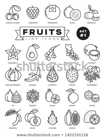 Outline of coconut fruit over black Stock photo © deandrobot
