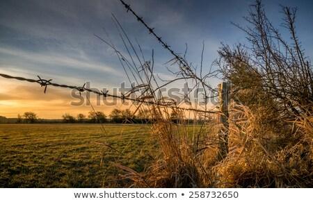 Arame cerca Foto stock © IS2