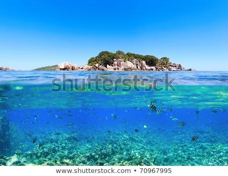 Subacuático fotos pequeño mar peces hermosa Foto stock © Yongkiet