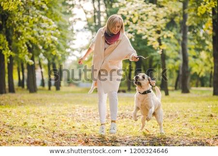 sétál · kutya · dob · bot · buzgó · társ - stock fotó © kzenon
