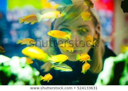 Foto stock: Pessoas · olhando · peixe · aquário · ilustração · mulher