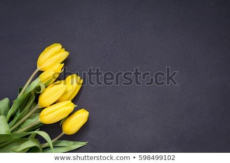 gyönyörű · citromsárga · tulipánok · fából · készült · felső · kilátás - stock fotó © ruslanshramko