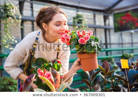Attractive cute woman gardener smelling plant in greenhouse. Stock photo © deandrobot
