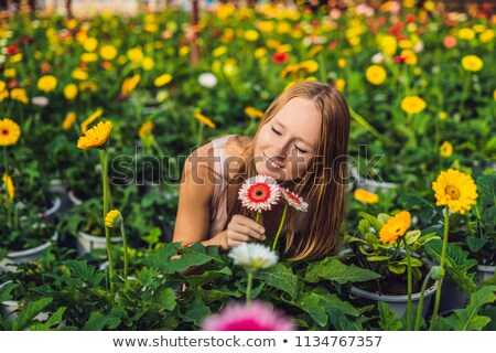 A young woman at a gerbera farm. Flower cultivation in greenhouses. A hothouse with gerbers. Daisy f Stock photo © galitskaya