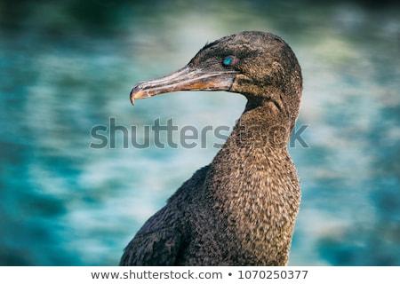 citromsárga · szem · tenger · toll · fekete · szín - stock fotó © maridav