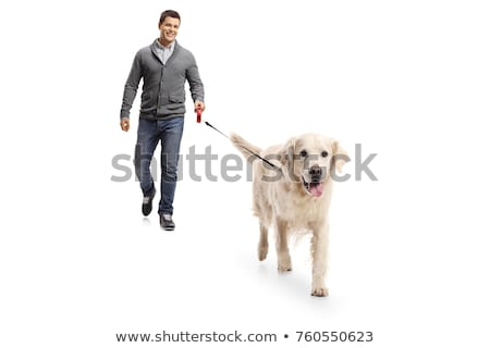 Man walking the dogs Stock photo © Kzenon