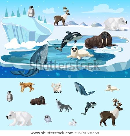 живая природа Арктика животные несут пингвин кролик Сток-фото © robuart