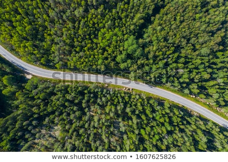 Road to the pine forest. Stock photo © justinb