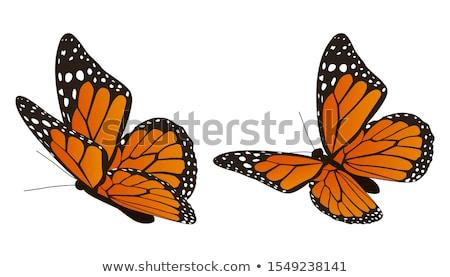 borboleta · vale · Havaí · EUA · verão · laranja - foto stock © arenacreative