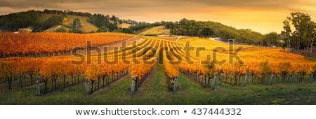ősz szőlőskert erdő késő nap tájkép Stock fotó © nailiaschwarz