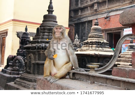 Monkey eating a carrot in India Stock photo © calvste