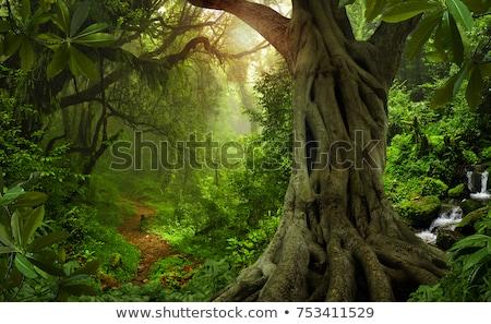 Tropical Rainforest Landscape Stock photo © Witthaya