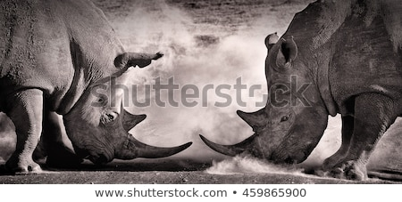 Two fighting rhinoceros Stock photo © Anna_Om