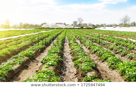 Cultivated land in a rural  Stock photo © cozyta